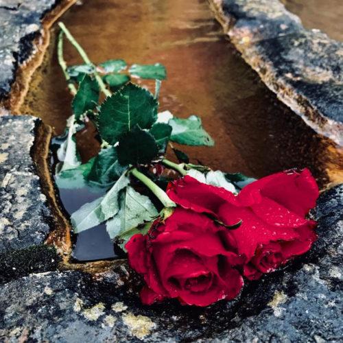 annabel du boulay avalon rose retreat